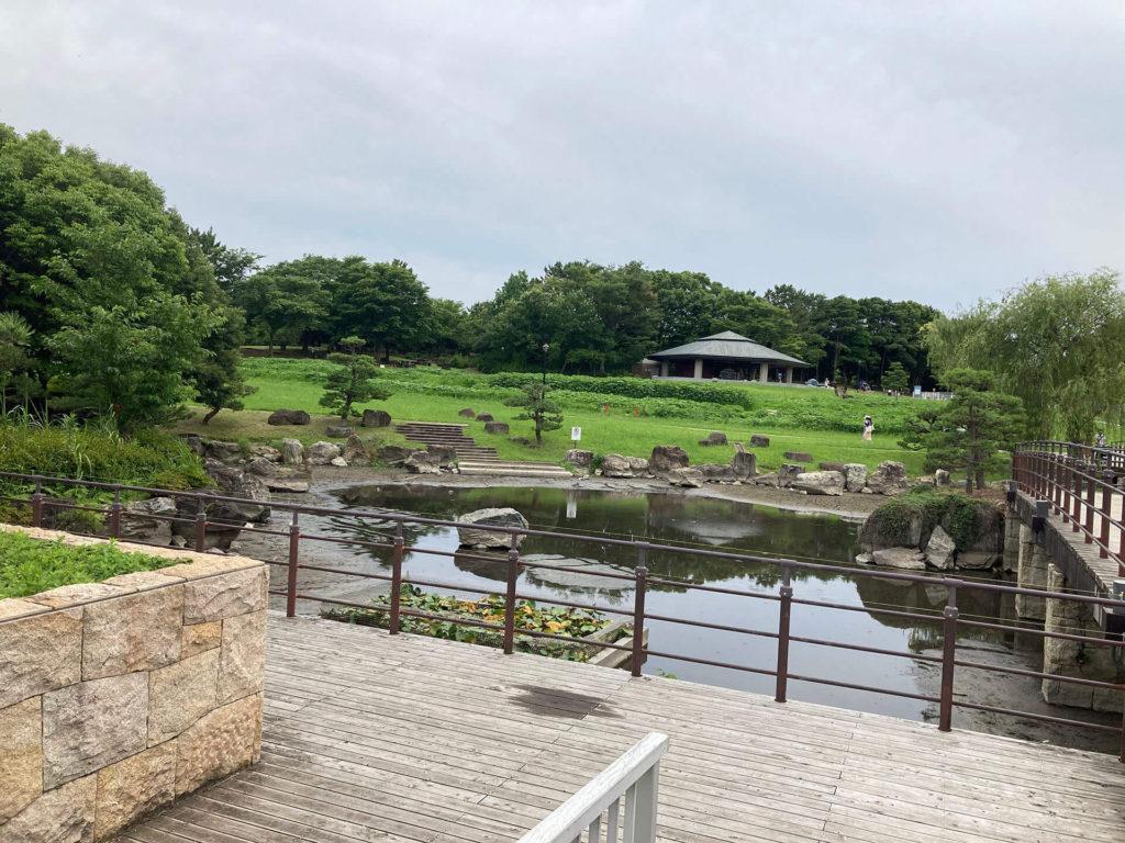 葛西臨海公園の蓮池