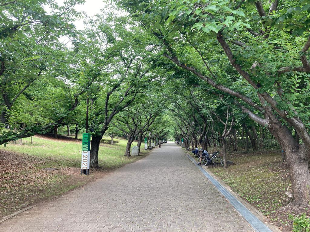 葛西臨海公園のサクラ並木
