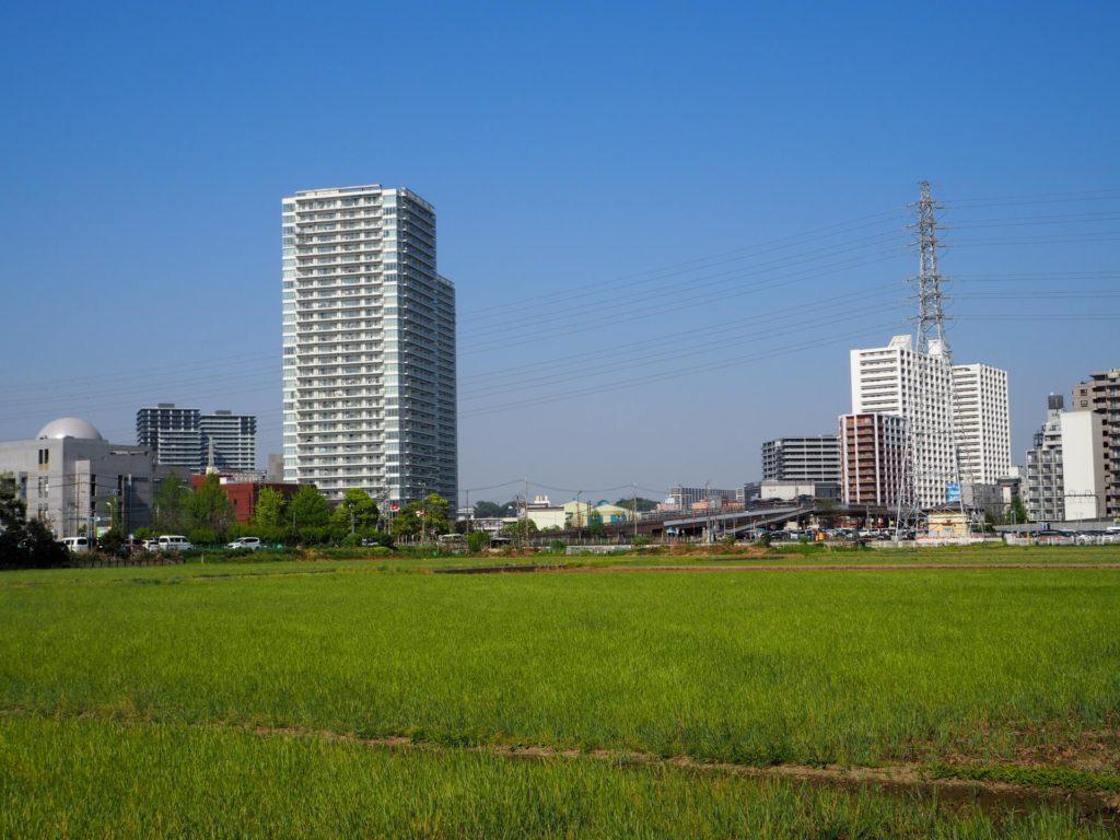 水田から海老名の市街地を見る